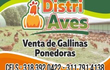 Distriaves, Roldanillo - Valle del Cauca